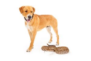 Snake Bites for Dogs